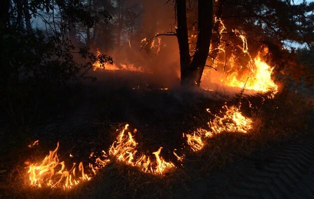 Лесные пожары на Луганщине признаны чрезвычайной ситуацией – глава ОГА