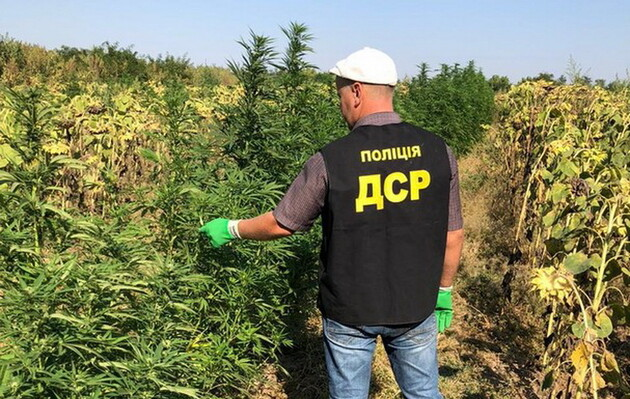 Катастрофы украинской наркополитики
