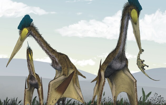 Ученые раскрыли тайну прочности шей гигантских птерозавров