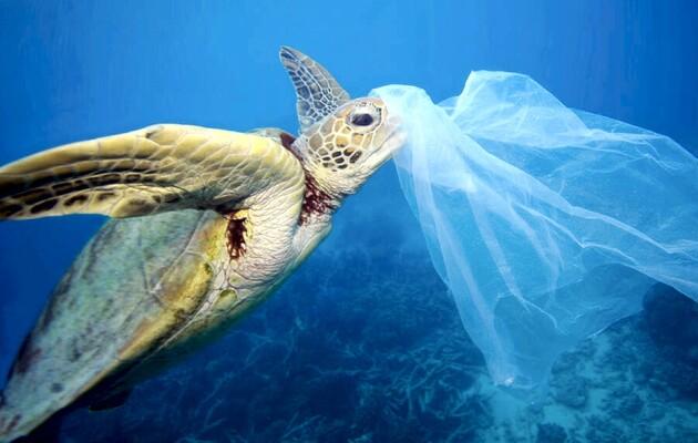 Морские черепахи попали в «эволюционную ловушку» из-за пластикового загрязнения