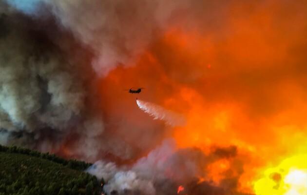 В Алжирі жертвами лісових пожеж стали щонайменше 65 людей